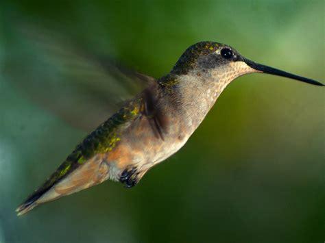 hummingbirds in fall