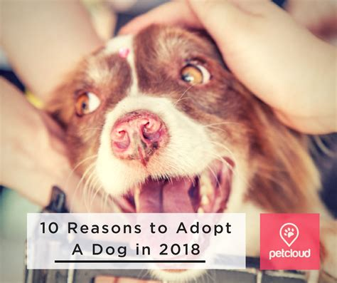 8 Reasons To Adopt A Pet From A Shelter by 10 Reasons To Adopt A In 2018 Petcloud