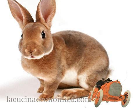 come cucinare il lepre pellegrino artusi lepri e conigli arrosto paperblog