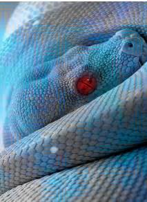 Picture rainbow snake i imgur com
