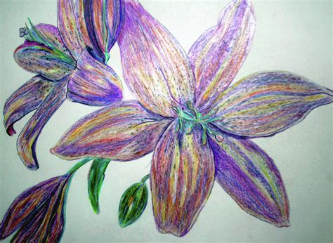flowers in colored pencil colored pencil flowers by lisa stanley