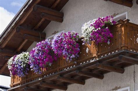 fiori per terrazzi terrazzi e balconi piante da terrazzo caratteristiche