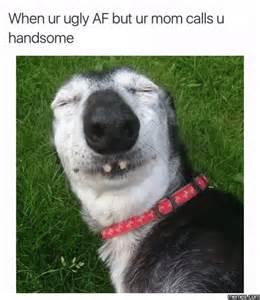 Ugly Dog Meme - when your ugly af dog jokes memes pictures