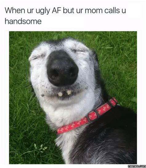 Ugly Dog Meme - when your ugly af dog