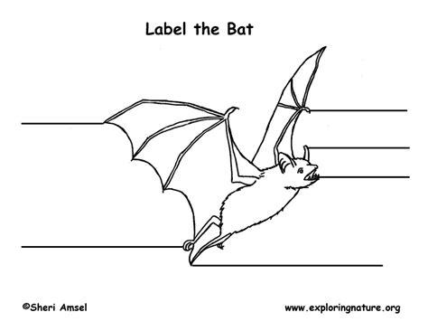 labelled diagram of a bat bat labeling page