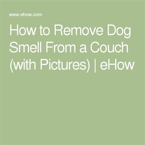 how to get dog smell out of couch 106 best images about couch on pinterest furniture