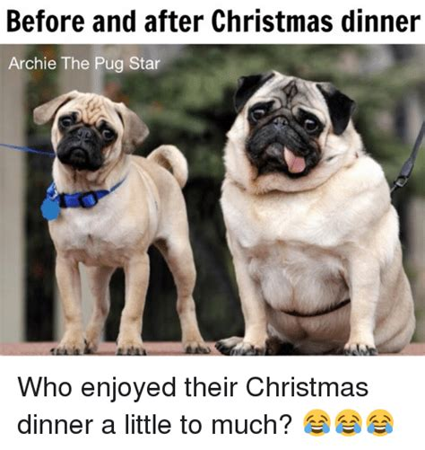 pug before before and after dinner archie the pug we who enjoyed their