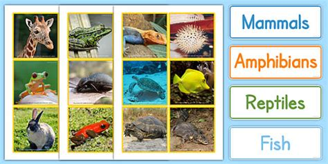 6 best images of zoo animal sorting card printables zoo animal groups sorting cards photos animal groups sort