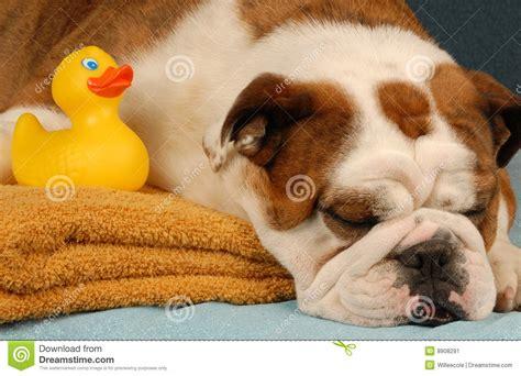 puppy bath time bath time stock image image 8908291