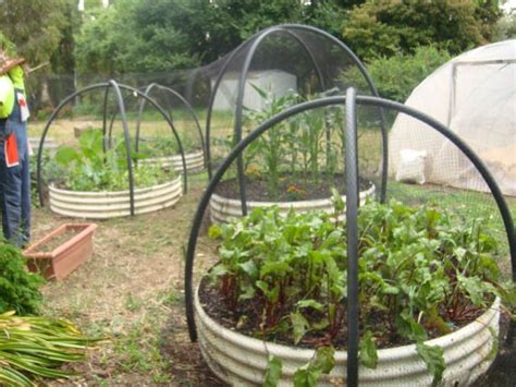 1000 Images About Garden Screening On Pinterest Gardens Netting For Vegetable Gardens