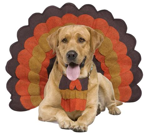 dogs and turkey top faq s for care and comfort this thanksgiving paws into grace