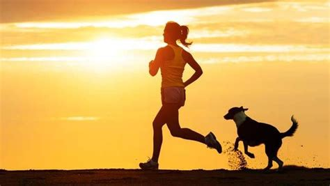 running with dogs best breeds for running companions mnn nature network