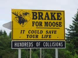 Sweepstakes Exhortation - brake for moose rep man