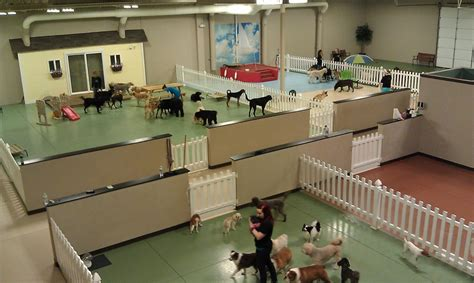 the dog house doggie daycare repinned doggie daycare business inspiration ideas from around the web dog