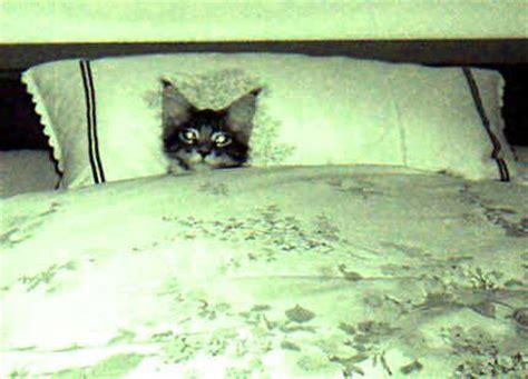 katze pinkelt auf bett katzen meine lieblinge im bett klar