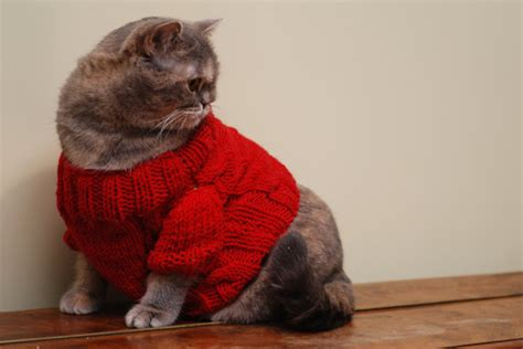 sweater for cat cat clothes warm knitted sweater