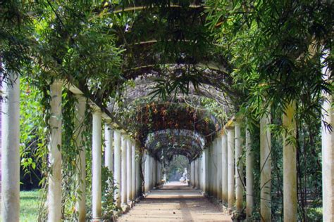 best climbing vines for pergolas vines for the pergola softwoods