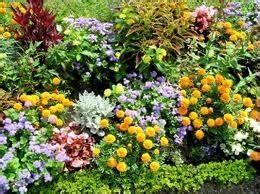 fiori estivi da giardino giardino e orto astrogiardino pagina 2