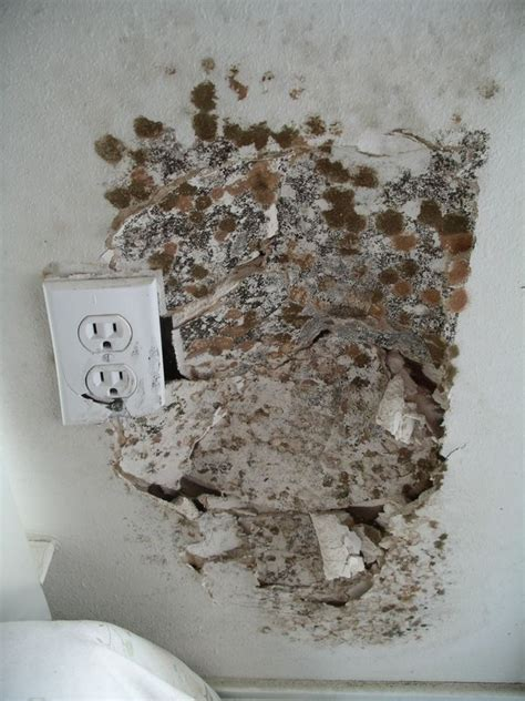 mold in the house house mold sle jpg