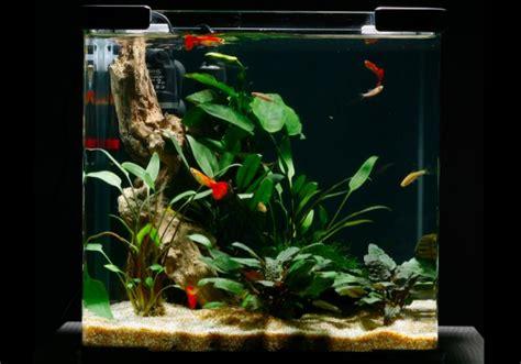 aquarium design for guppies guppy nano 169 practical fishkeeping aquarium