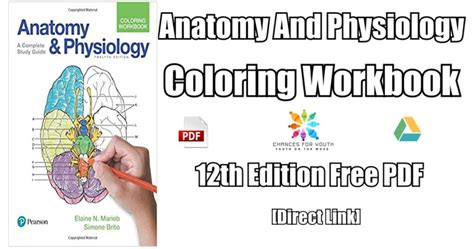 anatomy and physiology coloring book s essentials of human anatomy and physiology 13th