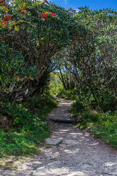 craggy gardens trail blue ridge mountain