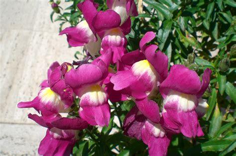 bocca di fiori bocca di la casa dei fiori