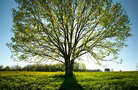 best trees for drought areas drought tolerant trees by zone
