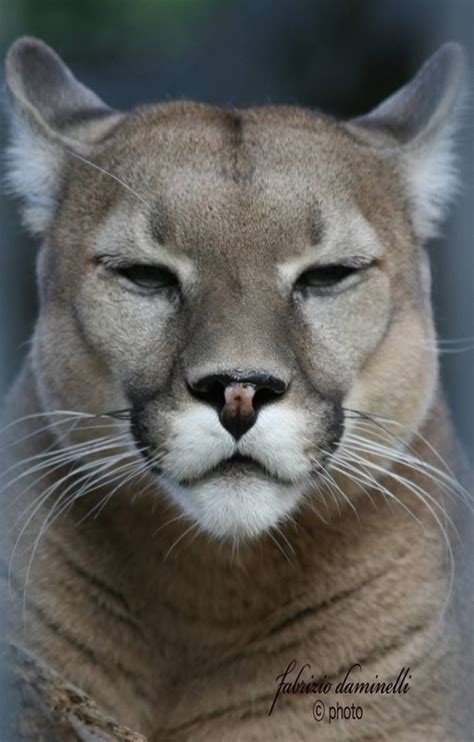reset nvram mountain lion 940 best big cats images on pinterest big cats animal