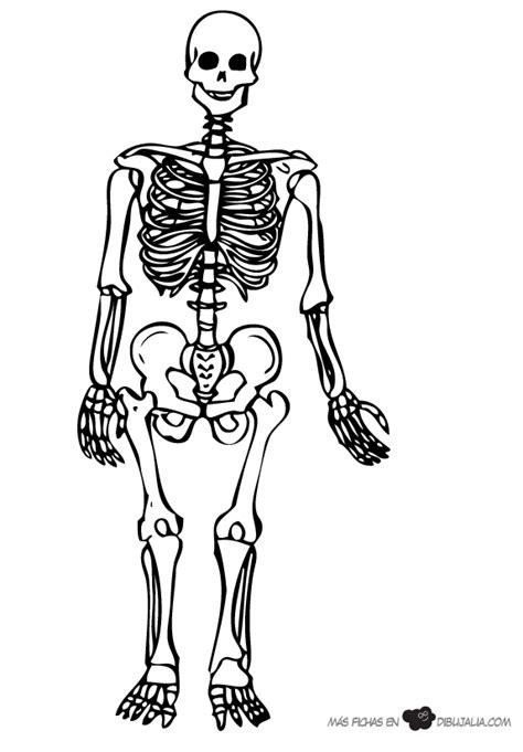 imagenes de calaveras y esqueletos para colorear el esqueleto dibujalia dibujos para colorear