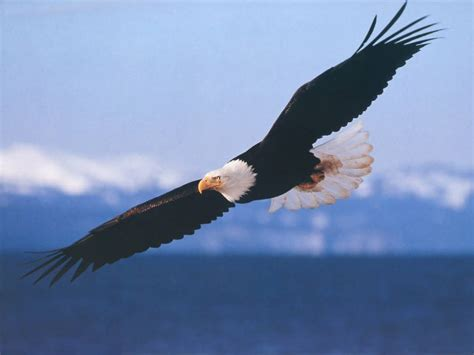 On Wings Of Eagles 1 wings like eagles the of god
