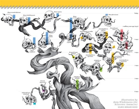 design evolution meaning the origin of humans is surprisingly complicated