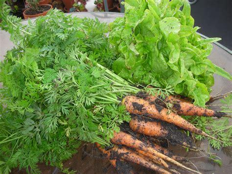 zone 9 vegetables preparing the zone 9 fall vegetable garden vegetable