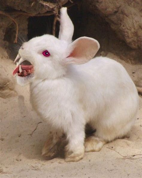 killer rabbit tattoo fluffy the bunny from hell from the witch and the