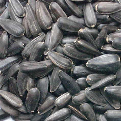 untreated black sunflower seeds sunflower seeds grey or black petstop australia