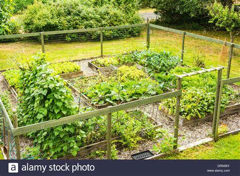 Garden Astoria by Backyard Vegetable Garden Astoria Oregon Usa Stock