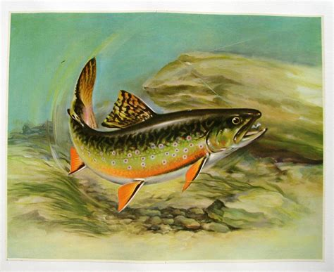 printable fish poster 1940 s angry trout lure antique fishing vintage fish