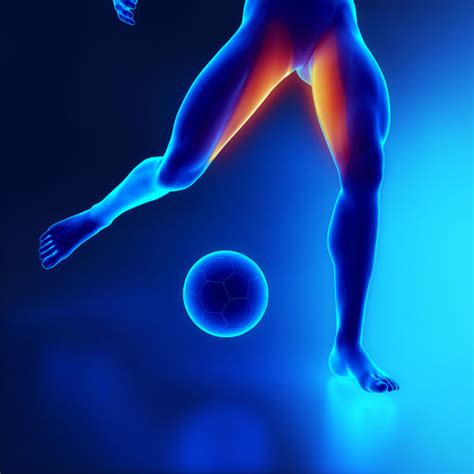 dolore interno coscia inguine salute osteopatica