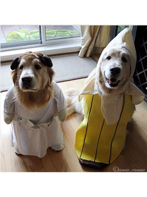 cutest halloween costumes  dogs sonderlives
