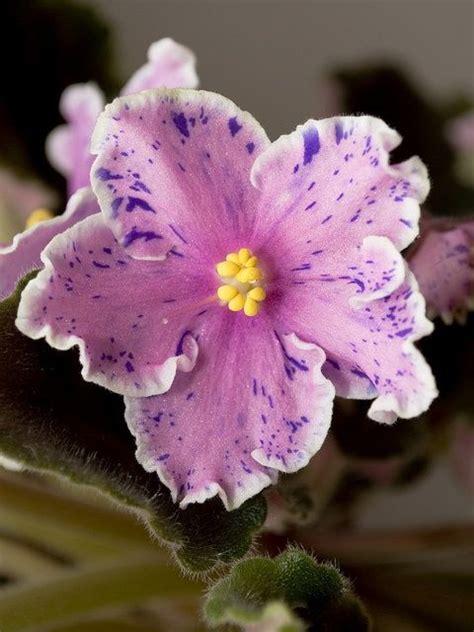 Und Stauden 3939 817 besten flowers 176 bilder auf