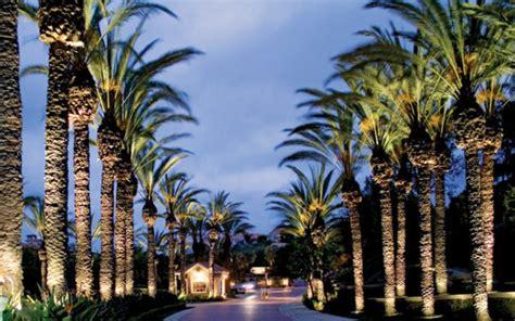 palm tree lighting ring message from shari senior options inc