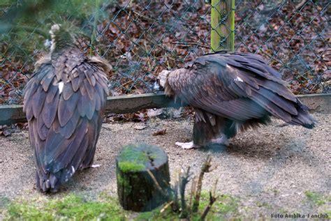 Zoologischer Garten Club by Www Zoo Wuppertal Net M 246 Nchsgeier Ausbruchsversuch