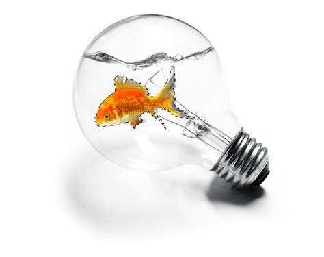 photo editing create a imaginative picture of a goldfish