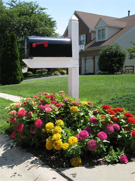 mailbox flower bed mailbox gardening zinnia beds for scorching summer color