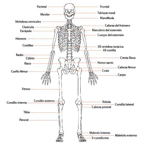 imagenes educativas del cuerpo humano best 25 nombres del cuerpo humano ideas on pinterest