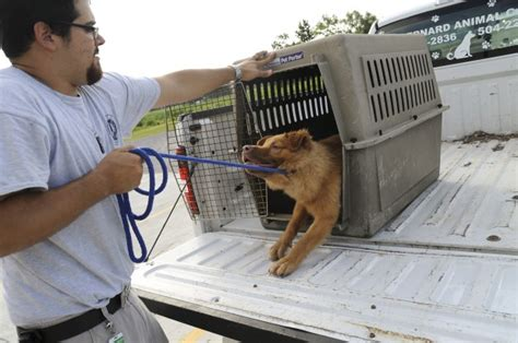 kennel worker salary five veterinary clinic to pursue kyle menant an animal worker