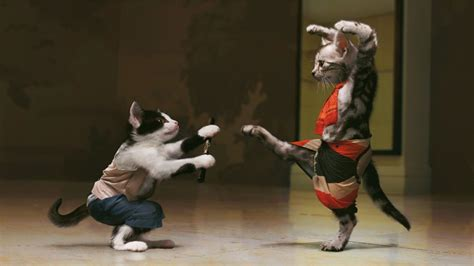 Fighting kung fu cats cat animal funny wallpaper animals wallpaper