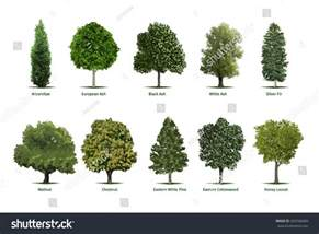 trees types tree types sortsspecimensvector tree illustrations