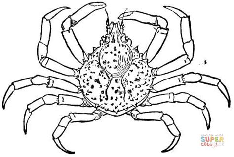 king crab coloring page spider crab coloring page free printable coloring pages
