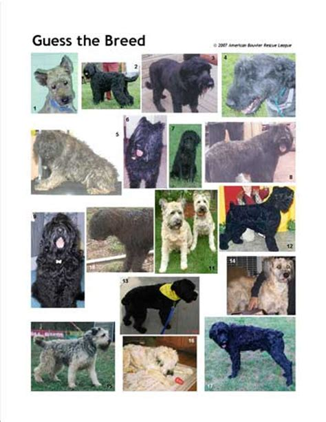 guess the breed american bouvier rescue league
